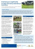Brachiaria grass significantly increases livestock productivity in East Africa