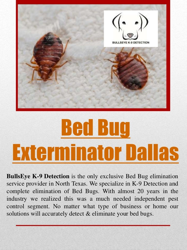 bugs port in pest sleeping you or exterminator chester are bed ysoli ny exterminators riverside your ct bug with home infestation