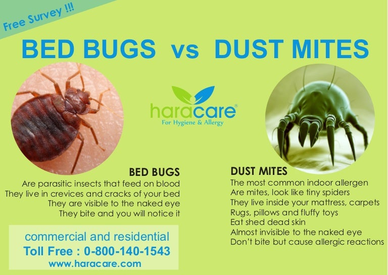 Are Dust Mites Bed Bugs