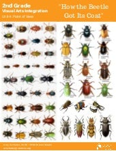 Beetle references