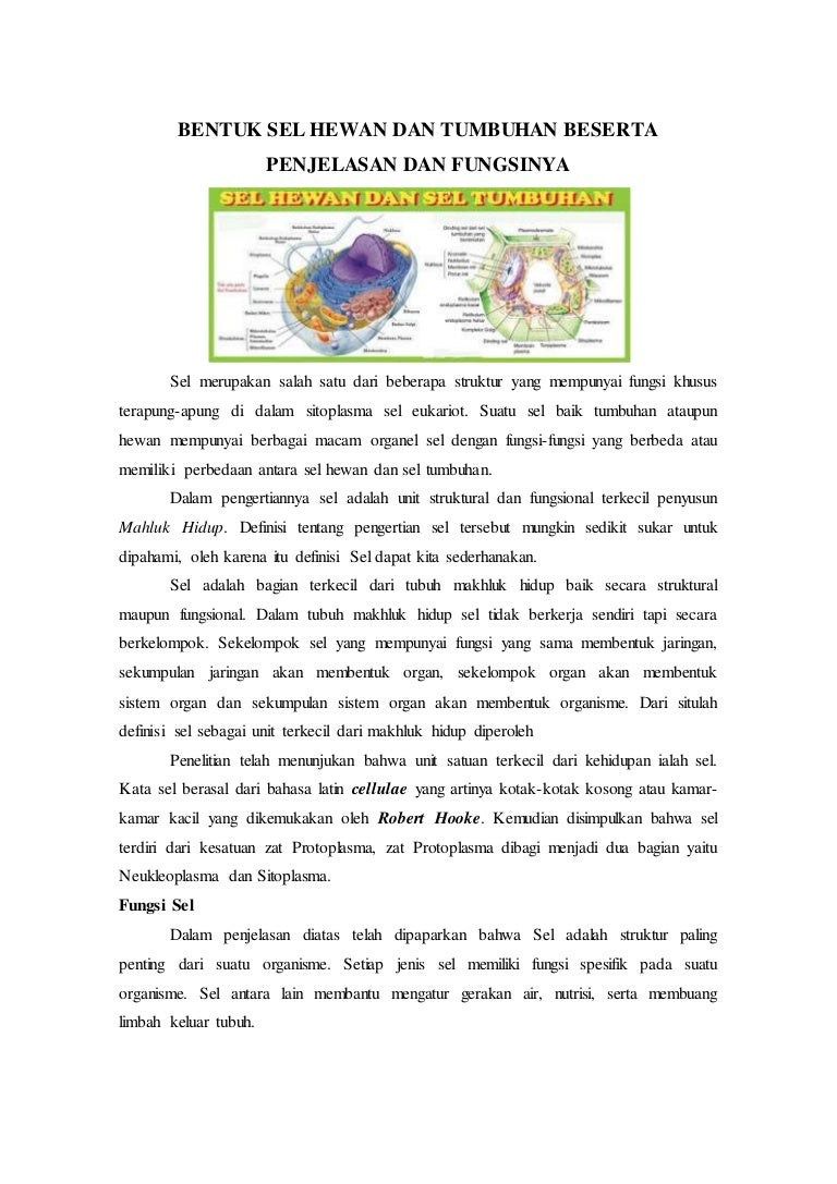 48 Gambar Jaringan Hewan Dan Tumbuhan Beserta Penjelasannya Terbaru