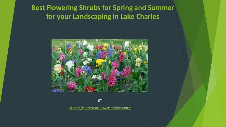 Best Flowering Shrubs For Spring And Summer For Your Landscaping In L