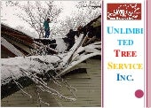 Best Storm Damage Annapolis - Unlimbited Tree Service Inc