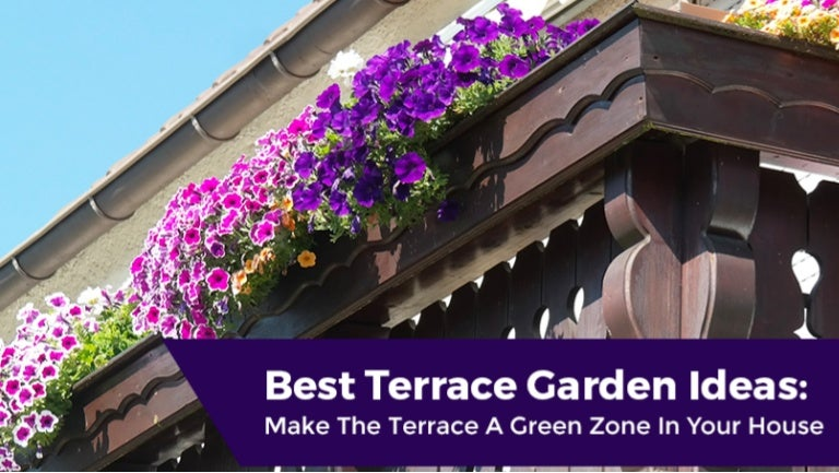 Best Terrace Garden Ideas: Make The Terrace A Green Zone In ... on full sun plants, plateau plants, zone 4 trees, evergreen rock garden plants, california plants, usda plants, united kingdom plants, zone 4 architecture, temperature zones for plants, zone 4 vines, garden mums plants, zone 4 landscaping, zone 4 flowers, zone 4 grasses, south dakota plants, san francisco plants, zone 4 gardening, roses plants, zone 4 roses, unknown plants,