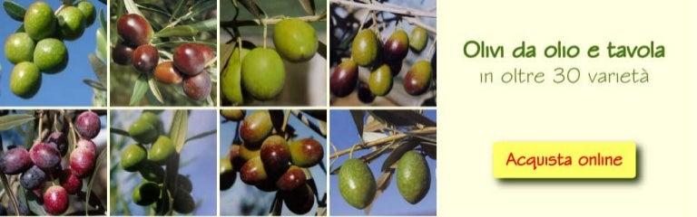 Slideshow piante da frutto vivai piante gabbianelli for Vivai piante da frutto