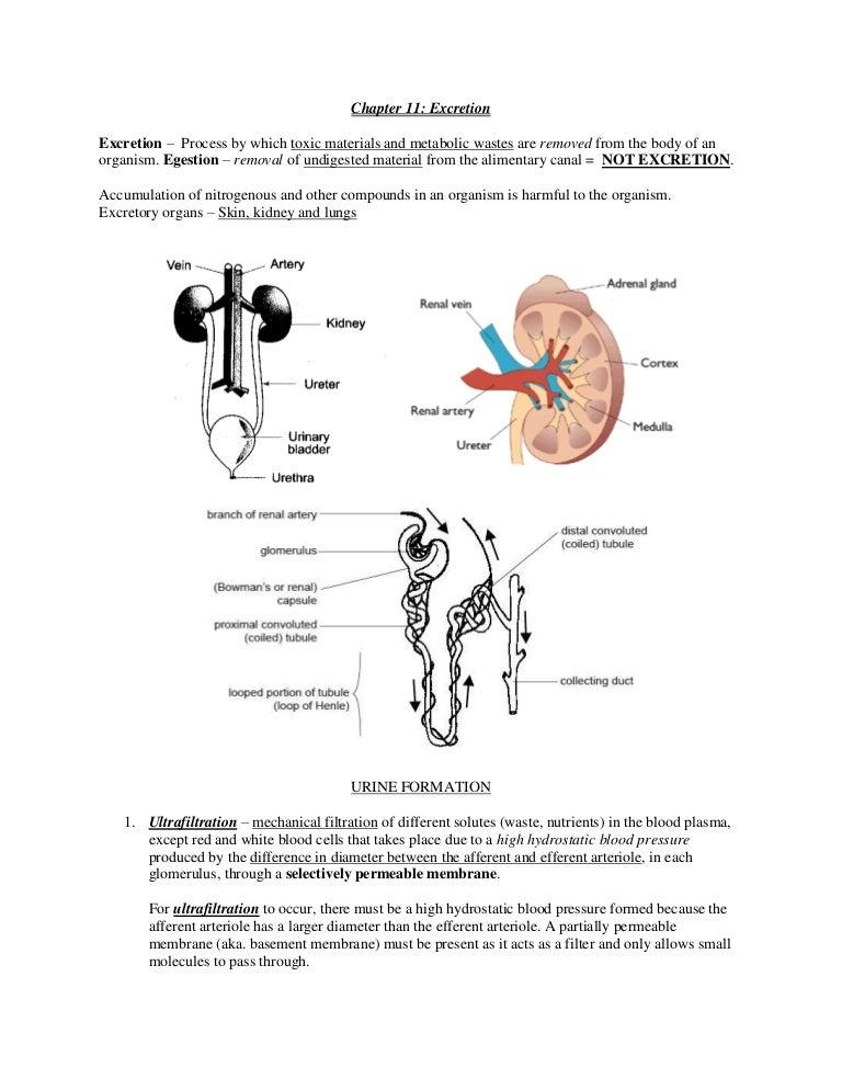 Wunderbar Anatomie Kapitel 4 Test Galerie - Anatomie Von ...