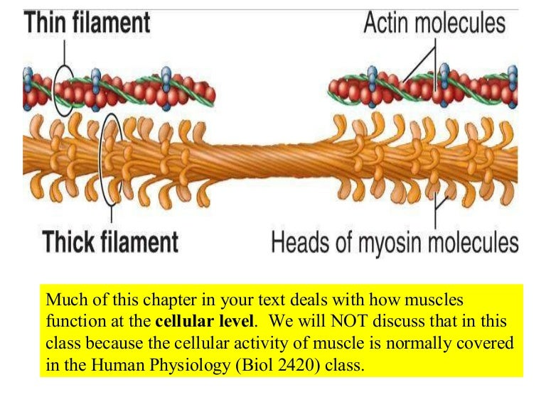 biology 013 7013 focuses on the application of the fundamental principles toward an understanding of human biology topics include genetics, cell biology, molecular biology, disease (infectious agents, inherited diseases and cancer), developmental biology, neurobiology and evolution.