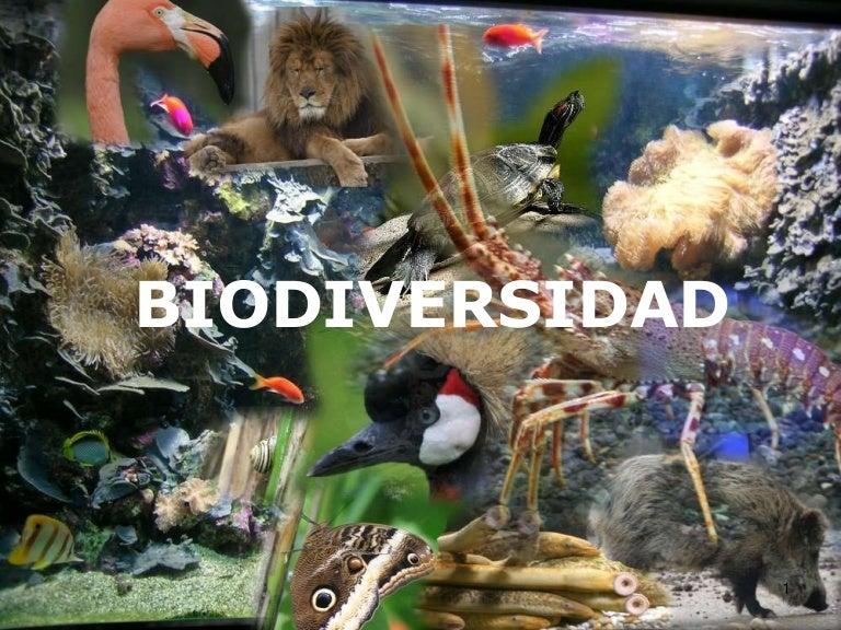 Resultat d'imatges de Biodiversidad