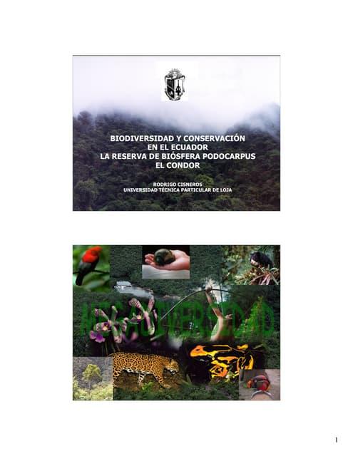 Biodiversidad Y ConservacióN En El Ecuador, La Reserva De Biosfera Podocarpus El Condor