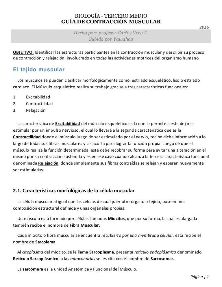 Biología 3° medio - Guía de Contracción Muscular