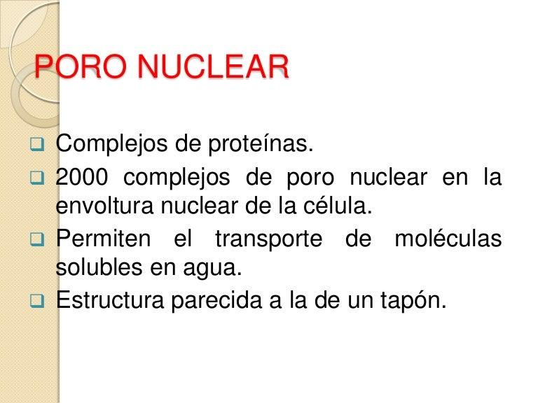 Poro Nuclear Lamina Nuclear Microfilamentos Y Microtubulos