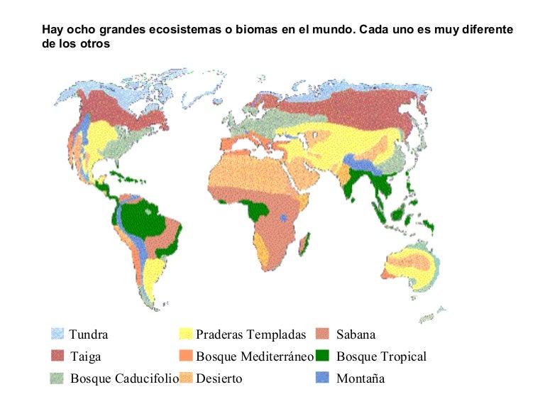Resultado de imagen para mapa  biomas   mundial
