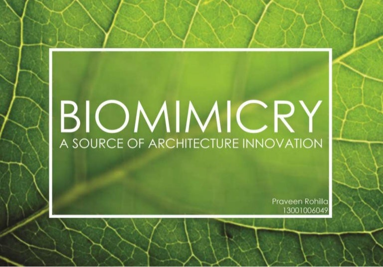 Biomimicry Source Of Architecture Innovation