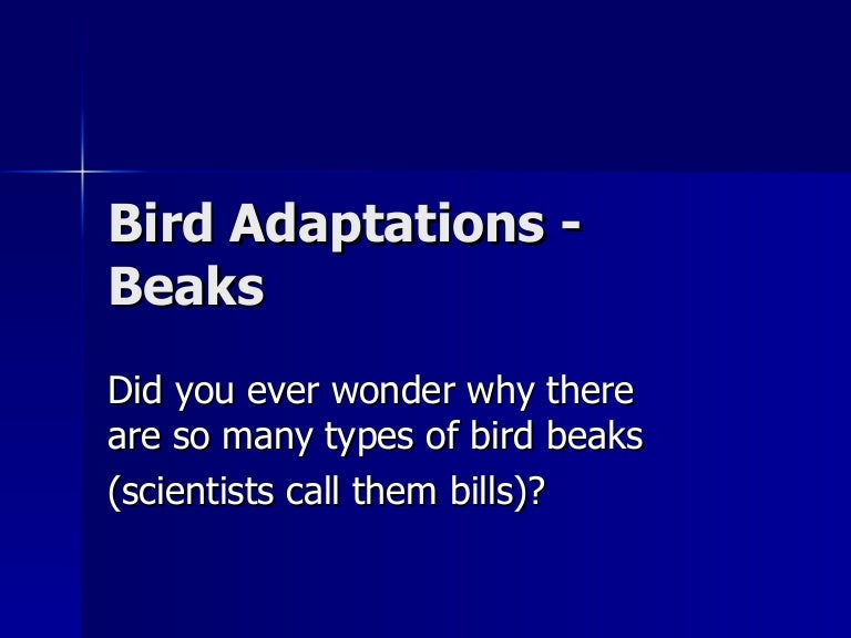 Bird Adaptations Beaks