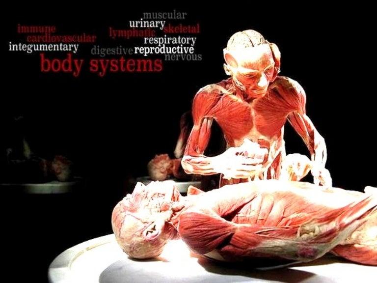 Body System Basics