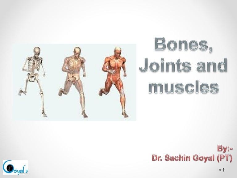 bones,joints ppt, Skeleton