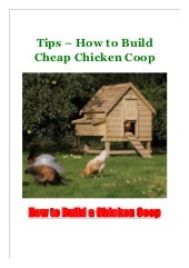 Tips - How to Build Cheap Chicken Coop