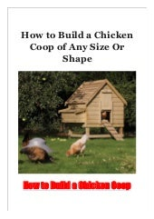 How to Build a Chicken Coop of Any Size Or Shape