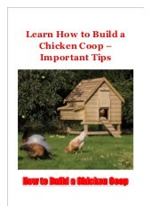 Learn How to Build a Chicken Coop - Important Tips