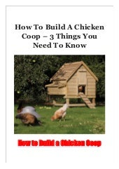 How To Build A Chicken Coop - 3 Things You Need To Know