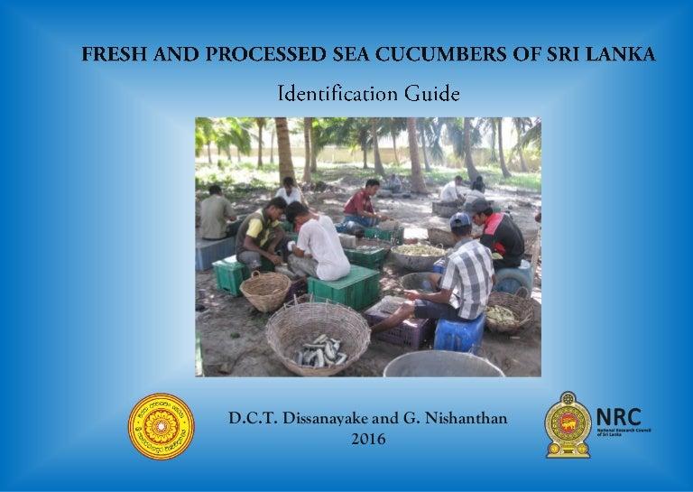 Fresh And Processed Sea Cucumbers Of Sri Lanka Identification Guide