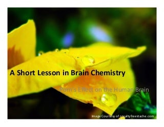 A Short Lesson on Brain chemistry