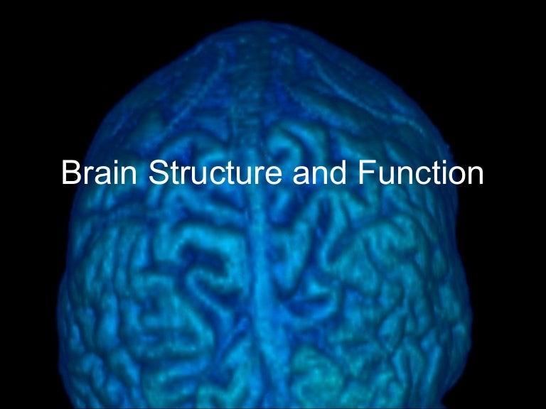 Brain Structure 2