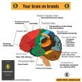 Brand psychology your brain on brands  infographic