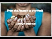 From the Amazon to the World: A Story of Brazil nuts