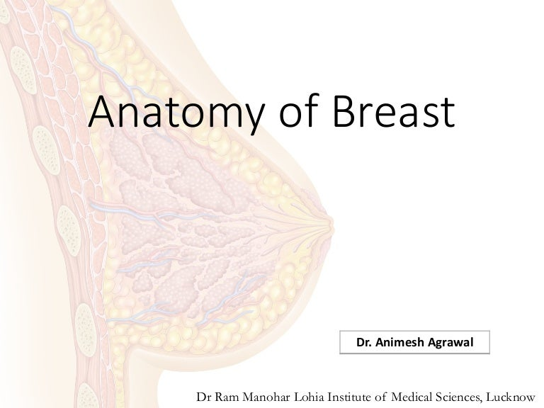 edga parenchymal areolar breast