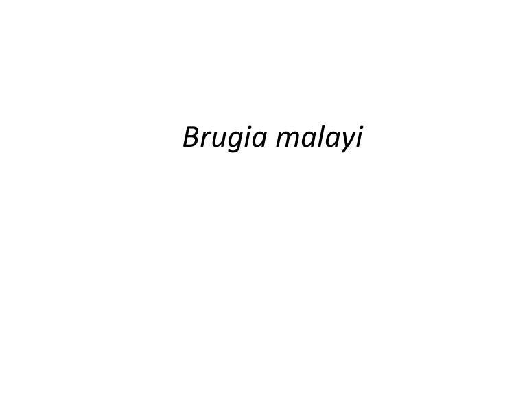 Brugia Malayi Egg