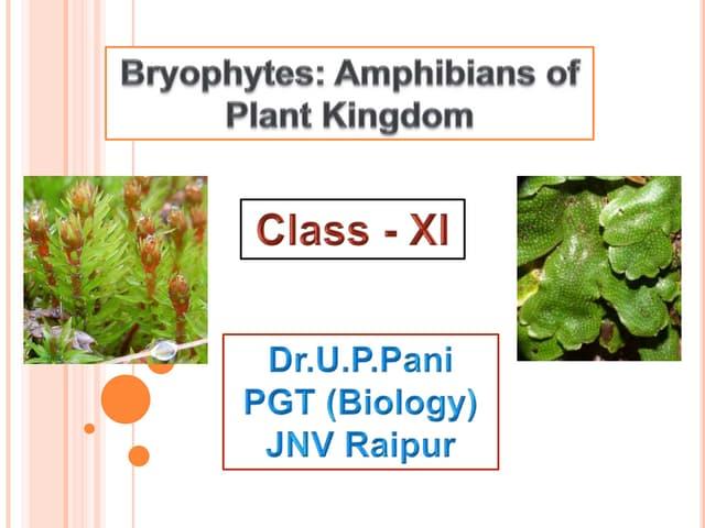 Bryophytes :Amphibians of Plant Kingdom