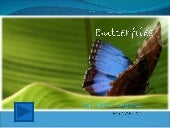 Butterflies Interactive Powerpoint