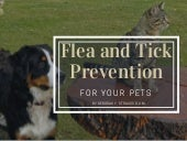 Flea and Tick Prevention for Your Pets