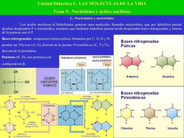 Nucleótidos Y ácidos Nucléicos