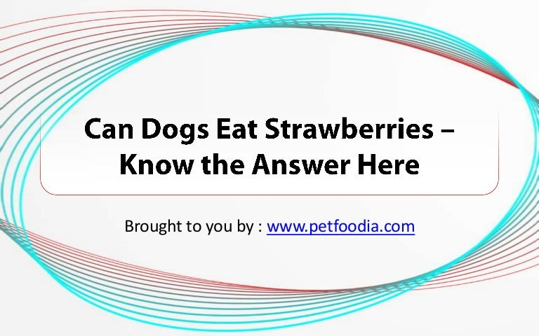 Can Dogs Eat Strawberries? – Know the Answer Here