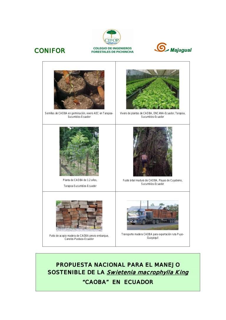 Gr/áfico de crecimiento de madera Animalitos Dida