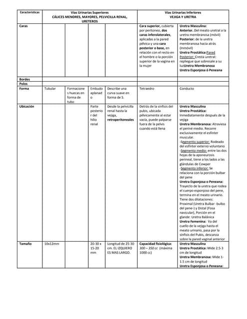 Caracteristicas vias urinarias inf y sup