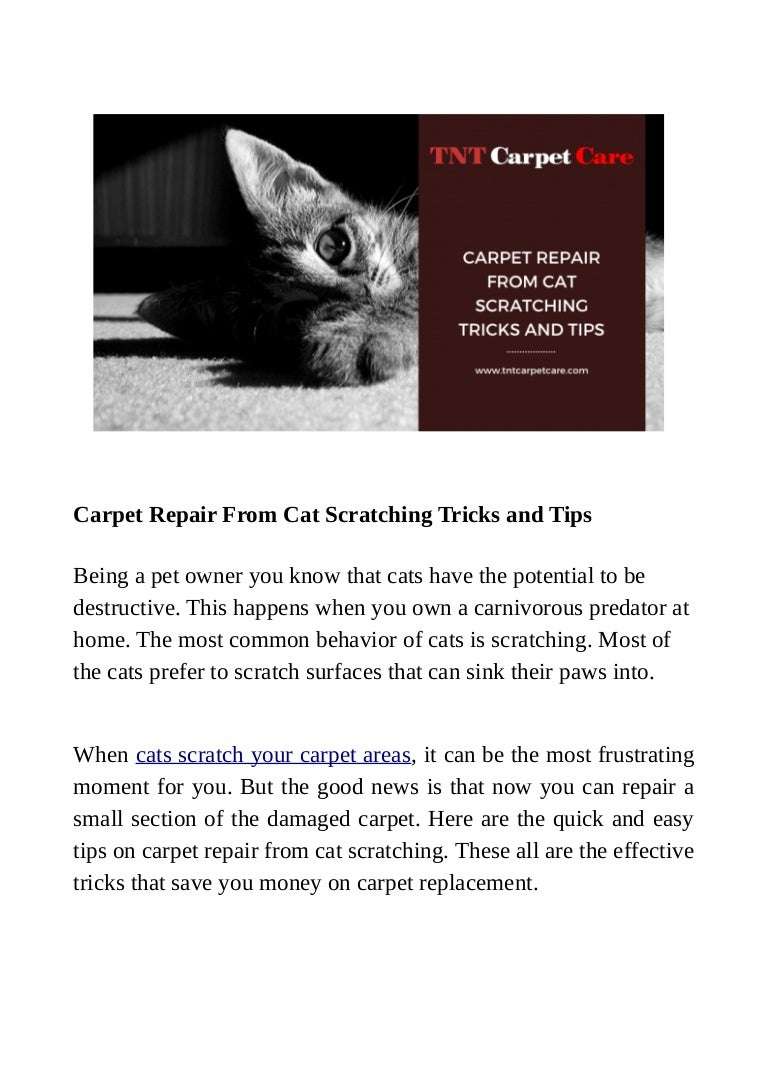 Carpet Repair From Cat Scratching Tricks And Tips