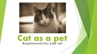 Cat requirements