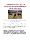 Cattle Behavior Tips - How It Helps You to Manage and Raise Cattle Effectively