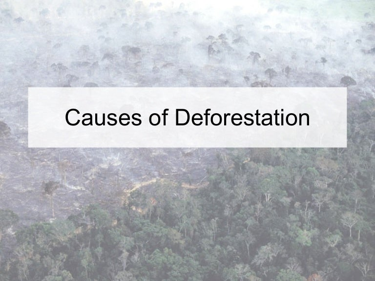 discuss causes and hazards of deforestation Causes of deforestation are the forces that motivate the agents to clear the forests however, most of the existing literature typically distinguishes between two levels of specific factors: direct and indirect causes of deforestation.
