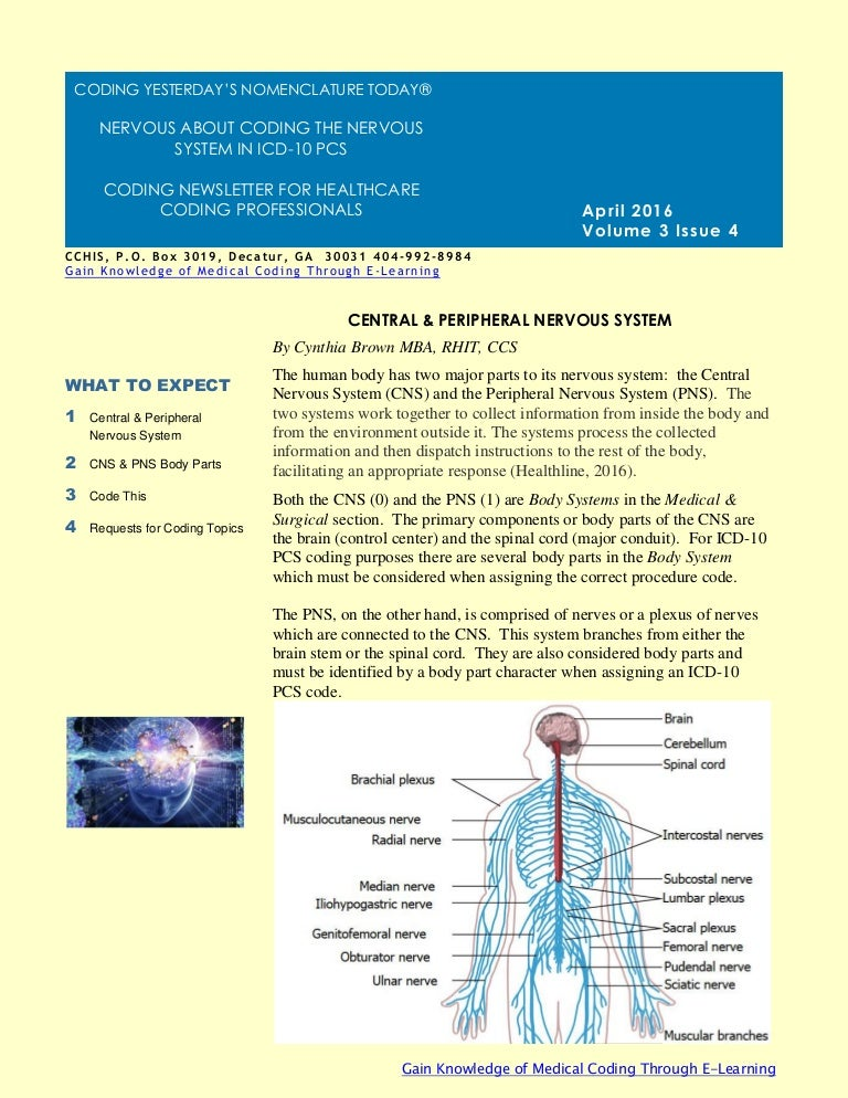 cchis april newsletter 2016, Muscles