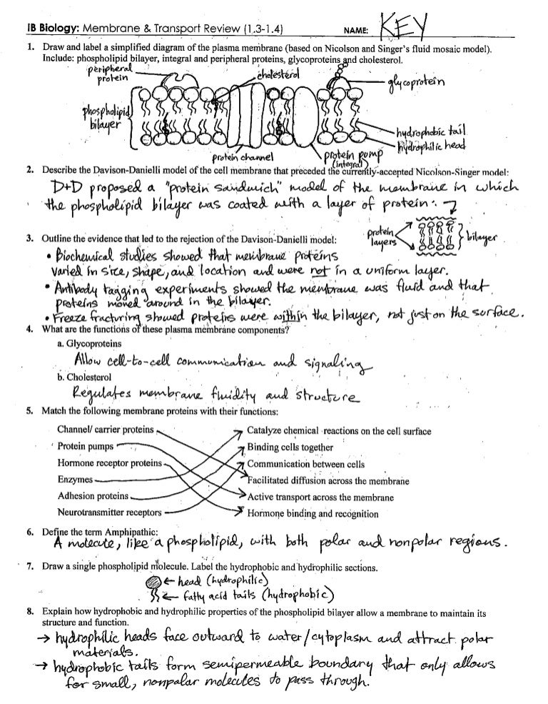 IB Cell Membrane Transport Review Key 1314 – Cell Membrane Worksheet Answer Key