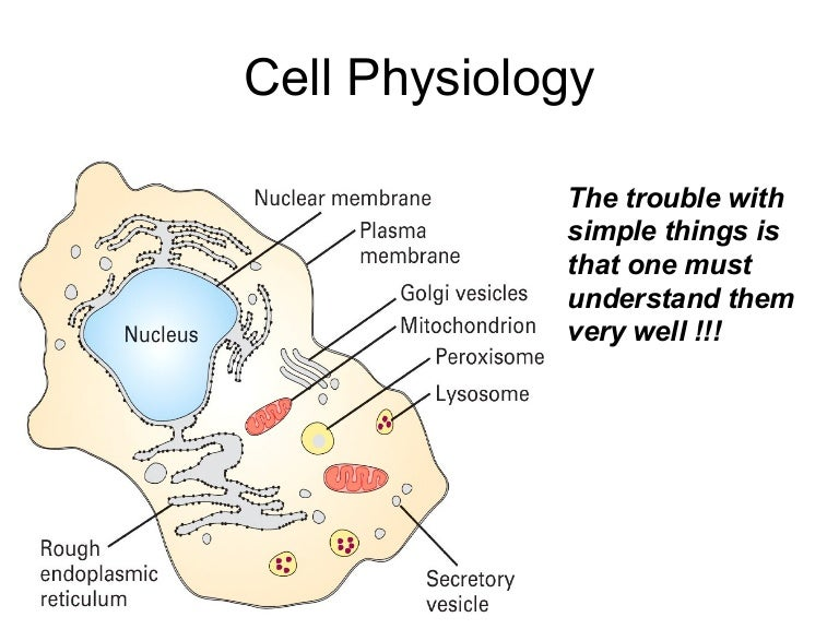 cellphysiology-091003030801-phpapp01-thumbnail-4.jpg?cb=1254539363
