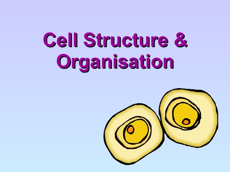 Cell structure and organisation ccuart Choice Image