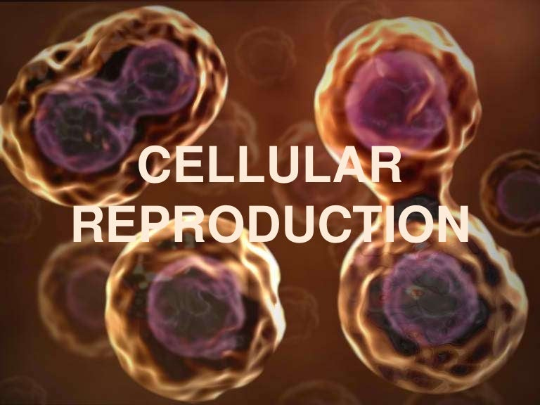 Cellular Reproduction Ppt