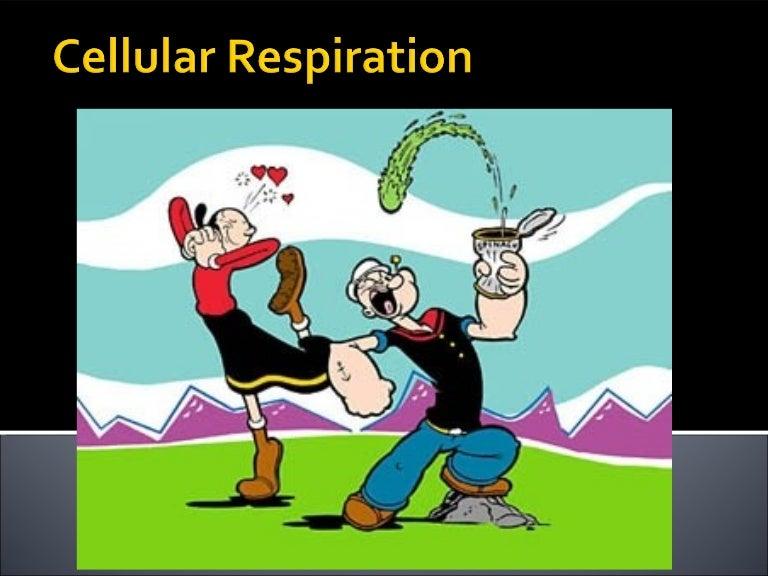 Cellular respiration 2012 ccuart Images