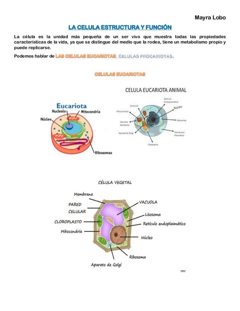 Celula Estructura Y Funcion Liquidos Y Electrolitos
