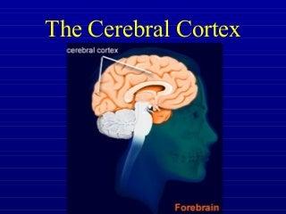 'brain cortex' on SlideShare